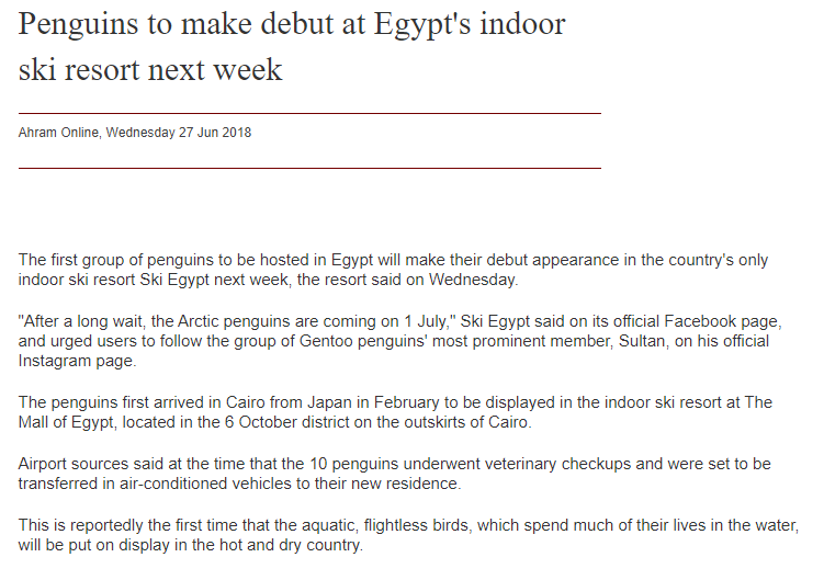 FireShot Capture 960 - Penguins to make debut at Egypt's ind_ - http___english.ahram.org.eg_NewsCo.png